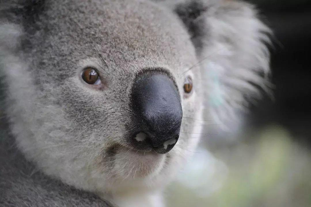 以太坊成为央行首选?澳大利亚央行开始在以太坊网络上测试央行数字货币插图