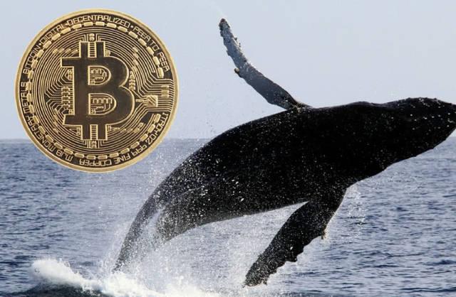 OKEx鲸鱼交易频现,超13000个地址拥有价值100万美元的比特币插图(2)